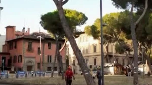 Piazza della Vittoria: il taglio dei pini nella città deserta / VIDEO