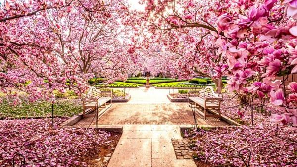Festa giapponese di primavera: ecco dove