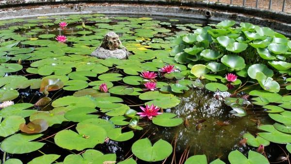 Il giardino di Boboli in fiore: le visite guidate per scoprire i suoi tesori