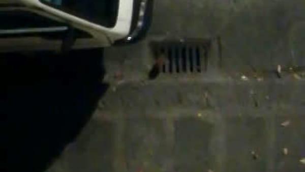 Sant'Ambrogio, la segnalazione: slalom tra blatte e roditori