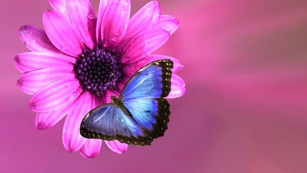 Firenze Flower Show: lo spettacolare volo delle farfalle